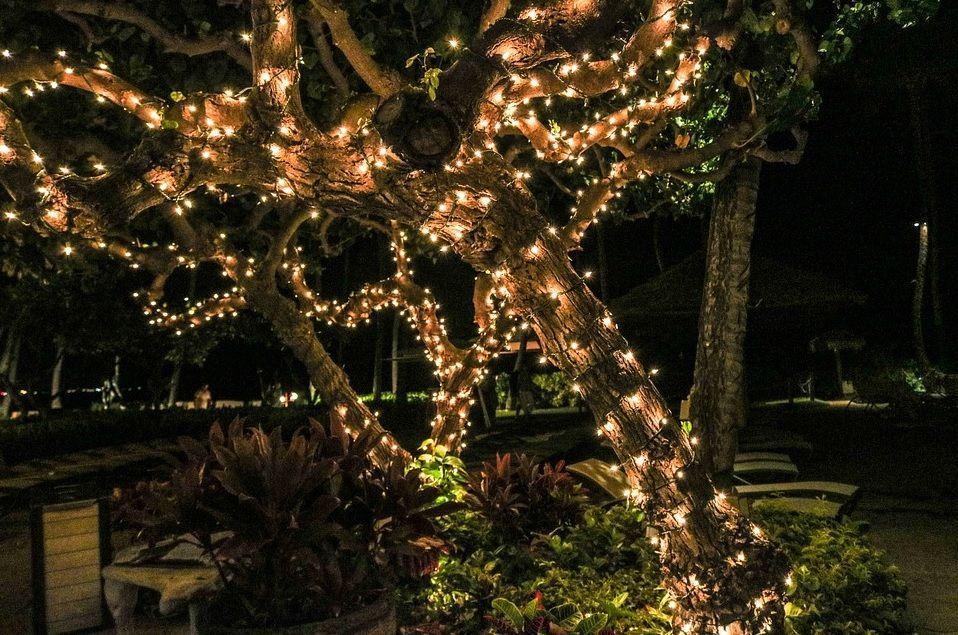 Decora con luces los árboles de tu jardín
